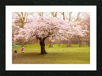 Blossom Tree Picture Frame print