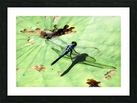 Dragon Fly Picture Frame print