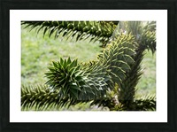 Plant Image Picture Frame print