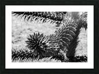 Plant Image BW Picture Frame print