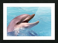 Happy Dolphin Photograph Picture Frame print