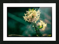 Rice Flower Picture Frame print
