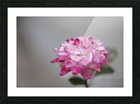Desert rose Picture Frame print