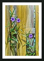 Fence Flowers 1 Picture Frame print