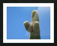 Saguaro Cactus Cradling A Birds Nest Photography Picture Frame print
