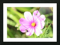 Flower Bug Picture Frame print