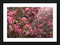 Flowering Tree Picture Frame print