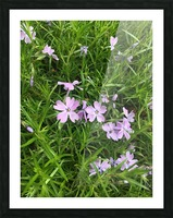 Purple Wild flowers Picture Frame print