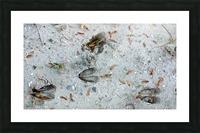 Carolina Deer Tracks Picture Frame print