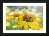 Yellow Flowers Photography Picture Frame print