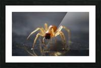 Best spider leg forward Picture Frame print