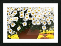 White Flowers In Hanging Pot White Flowers Canvas Print White Flowers Photograph 889 Picture Frame print