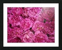 ROSE GARDEN   Picture Frame print