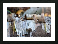 Fallen Birch Picture Frame print