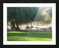 Horses at the park summertime  Picture Frame print