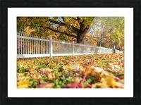 DSC_7158 Picture Frame print