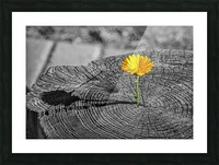 Life Persists Picture Frame print