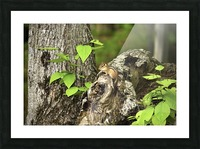 Chipmunk on tree Picture Frame print