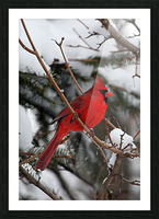 Vertical Cardinal Picture Frame print