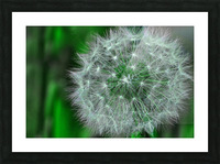 Make a wish Picture Frame print