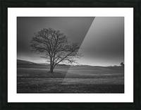 November Tree Picture Frame print