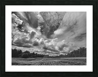 Corn Field Picture Frame print