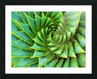 Cactus Spiral Picture Frame print