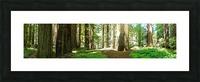 Redwood National Park Picture Frame print