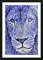 Male Lion Face thula art 5 Picture Frame print