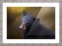 Black Bear Portrait Picture Frame print