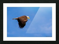 DSC_2352 Picture Frame print