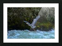 DSC_5880 Picture Frame print