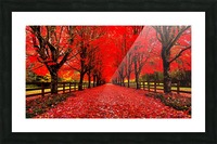 Red Carpet Picture Frame print
