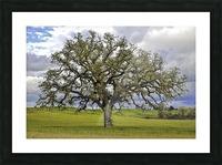 Lone Settler Picture Frame print