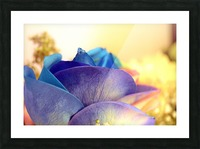 Colourful Days Picture Frame print