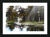 Turtle Territory   Picture Frame print
