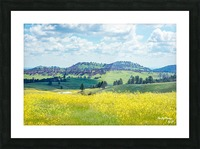 Custer State Park Yellow Picture Frame print
