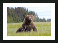 Big boy in the Meadow Picture Frame print