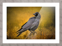 Black Crow Picture Frame print