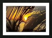 Sunrise through the palms Picture Frame print