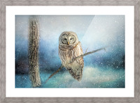 Barred Owl Solitude Picture Frame print