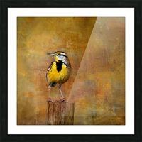 Eastern Meadowlark Picture Frame print