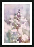 Soft Vintage Lupine Picture Frame print