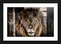 A Regal Lion Picture Frame print