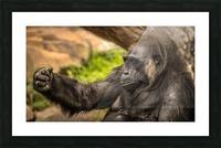 Quiet Gorilla Sleeping Picture Frame print