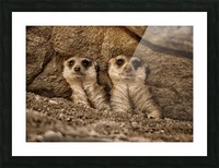 The Meerkat Twins Picture Frame print