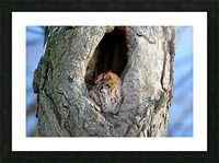 An Eye On You Picture Frame print