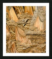Jagged Gold Picture Frame print