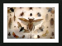 Biodiversity Picture Frame print