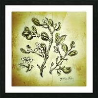 Mistletoe Picture Frame print